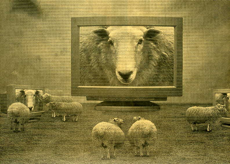 Sheep TV